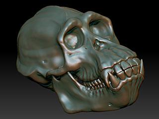 3D Chimp Skull